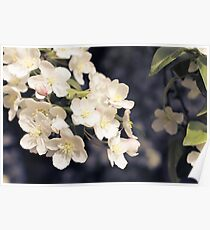Flowering Crab Apple Tree_2 Poster