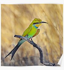 Bee Eater at Sunset.......... Poster