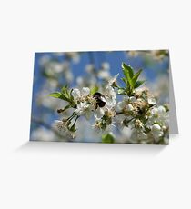 Bumblebee in a cherrytree Greeting Card