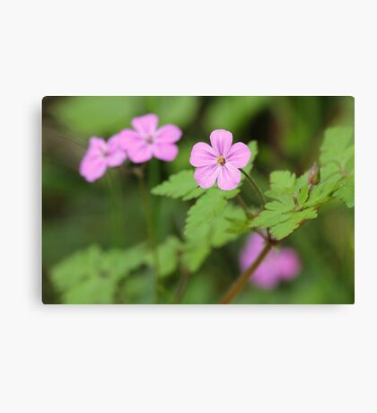 An Invasive Beauty Canvas Print