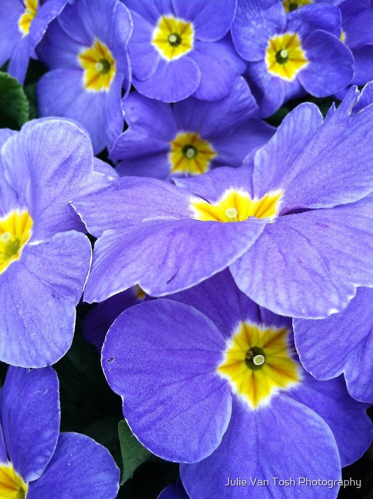 Primrose blue by Julie Van Tosh Photography