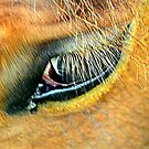 Horse Eye by Stan Owen