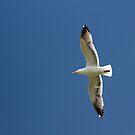 Seagull Flight by Annie Underwood