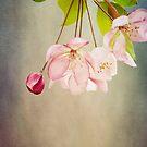Spring's Promise by KBritt