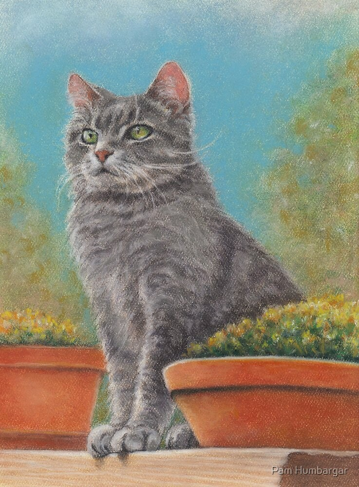 Cat with flower pots by Pam Humbargar