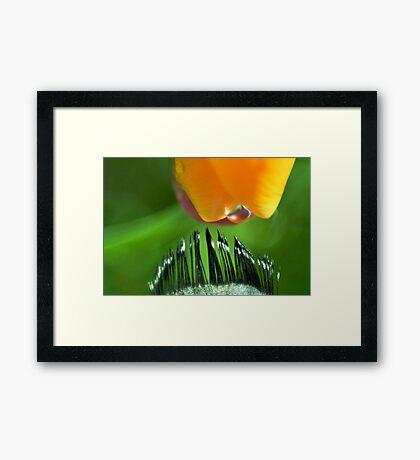 Kiss of Inspiration Framed Print