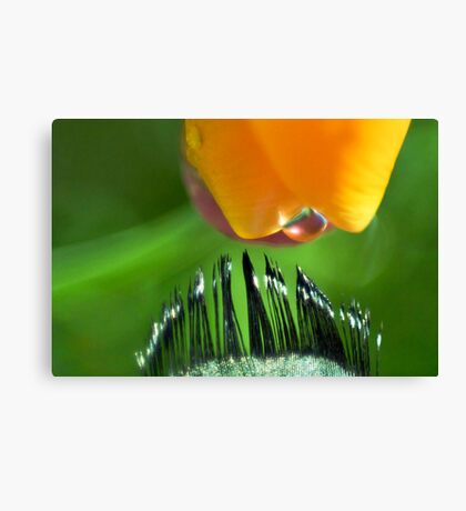 Kiss of Inspiration Canvas Print