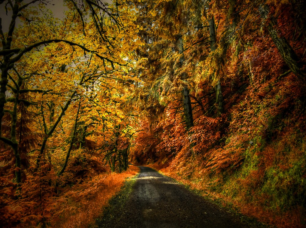 Colors Of Fall by Charles & Patricia   Harkins ~ Picture Oregon