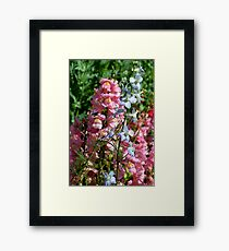 Blue and Pink in Nature Framed Print
