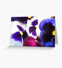 Pansies Magestic Giants Greeting Card