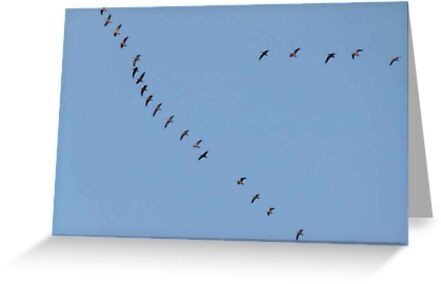 Flying High..Geese Heading North by MaeBelle