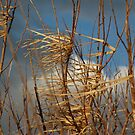Purple Moor Grass Caught by the Winter Wind by cuilcreations