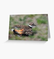 Killdeer - Off To Heaven Greeting Card