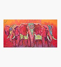 The Universal Indian Elephants, #69 Photographic Print