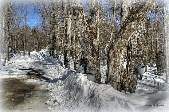 Sugaring Season on Farnsworth Hill  by Monica M. Scanlan