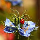The Lady & Love in a Mist by Chelsea Brewer