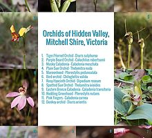 Hidden Valley Orchids by Paul Piko