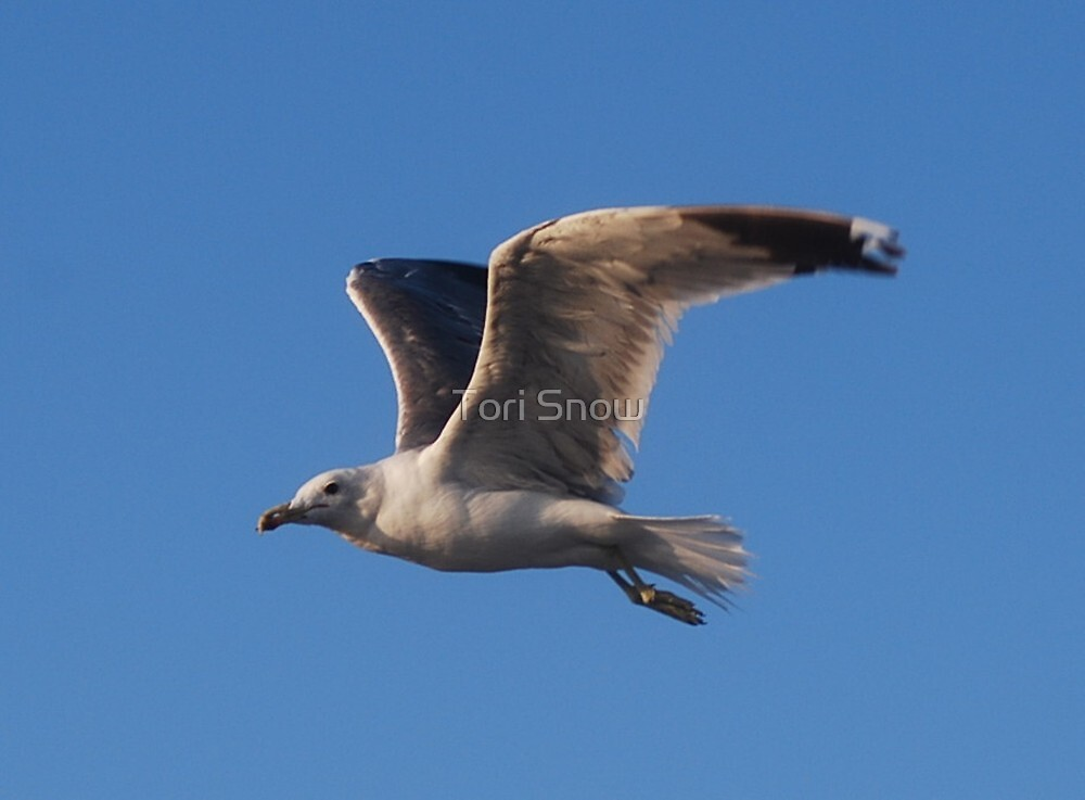 Seagull Fly By by Tori Snow
