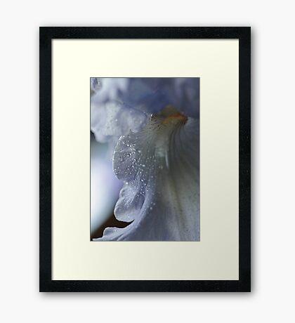 Purple Passion ~ Framed Print