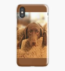 Cutie Pup - The world's Cutest Chocolate Lab iPhone Case/Skin