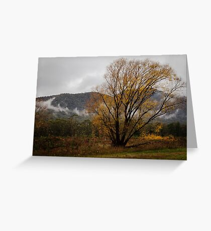 Golden Tree in the Mist at Bright Victoria Greeting Card