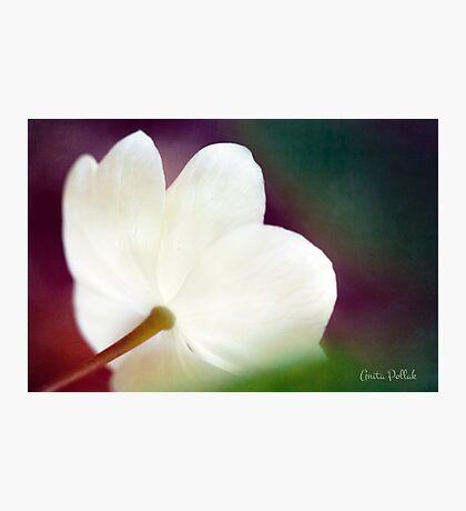 Magic Light Photographic Print