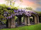 Wisteria in May by Jessica Jenney
