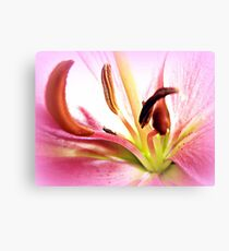 Pink Lily  in Macro Canvas Print