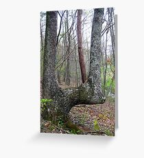 a lovely bent u tree Greeting Card