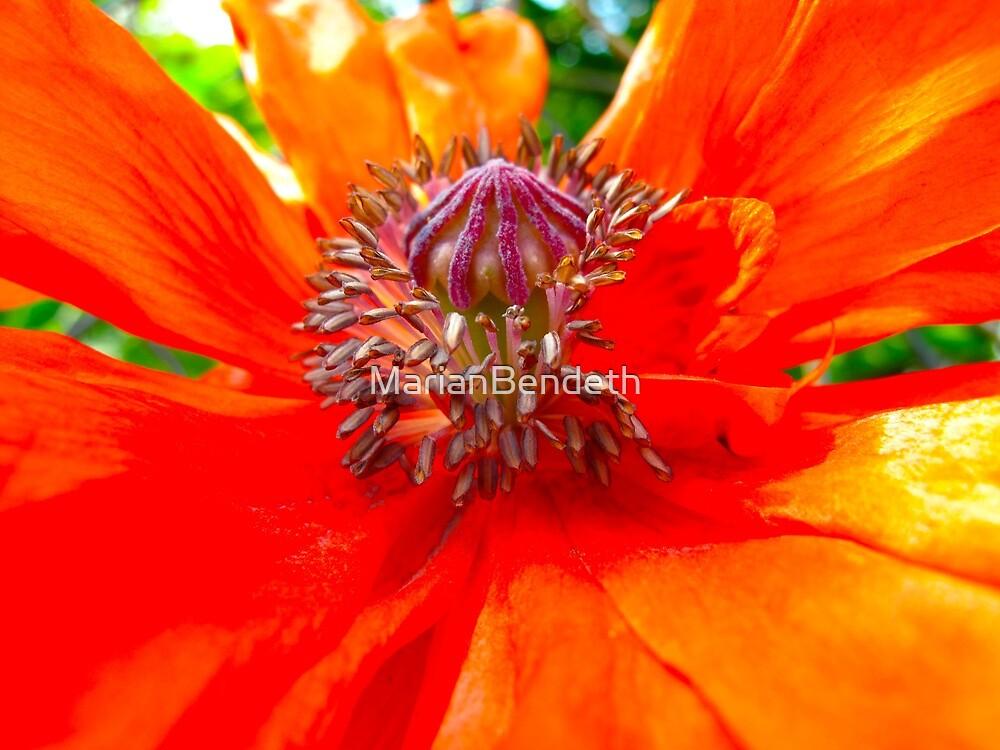 Memorial Day Poppy by MarianBendeth