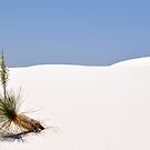 Stillness in Sand by Gayle Dolinger