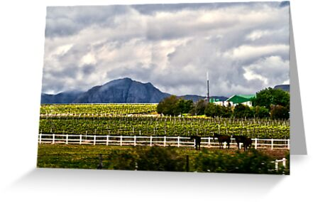 Capetown Farmlands by Tiffany Bumgardner
