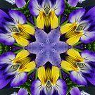 Pansies Fractal by Tori Snow