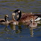 Mother Goose by Marvin Collins