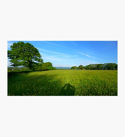 Sussex Meadow Photographic Print