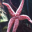 STARfish by gemmaeleanor