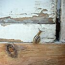 Snail on Old Wood by Leyh