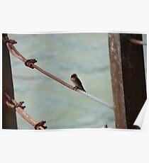 Little Bird on Metal Wire Poster