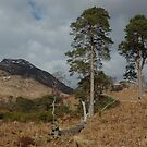 Scots Pines above Kinlochleven by cuilcreations