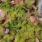 Moss amongst the Fallen Birch Leaves by cuilcreations