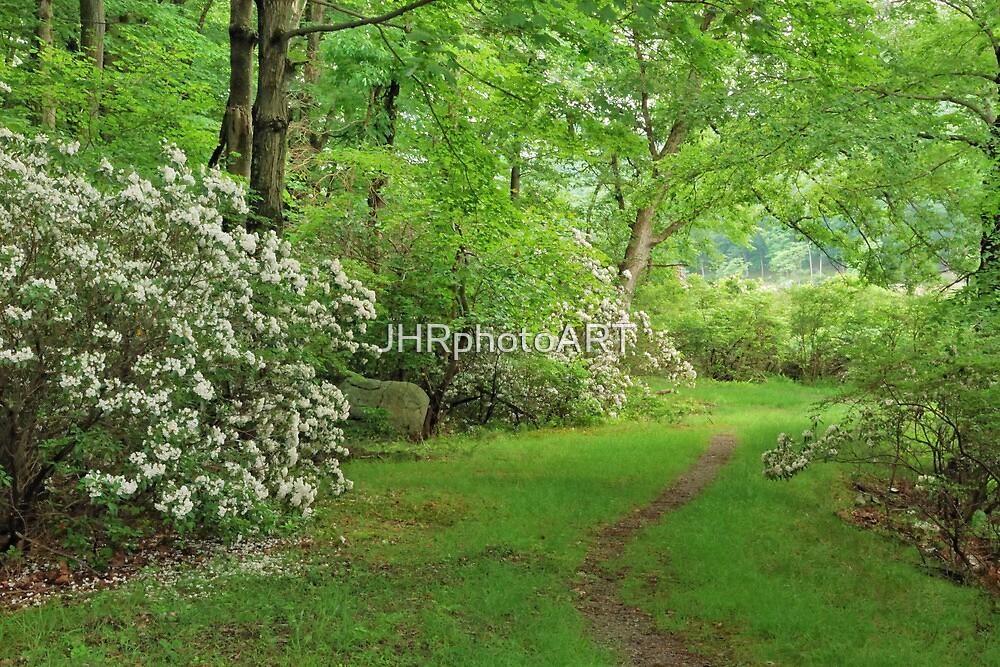 Mountain Laurel - Harriman Park by JHRphotoART