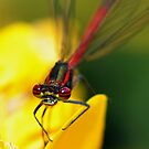 Red Eye by Russell Couch
