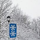 snow zone by Paul Kavsak