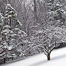 Saturn Snow by Paul Kavsak