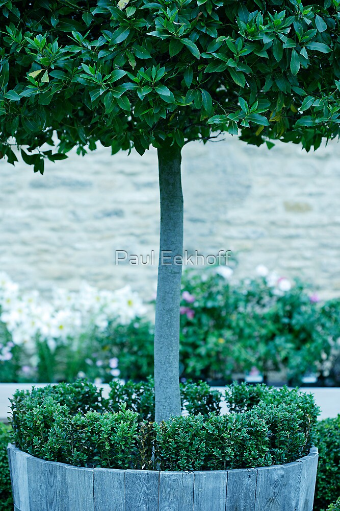 Topiary Detail by Paul Eekhoff