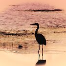 Heron At Twilight by Sharon Woerner