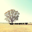 A Cow, A Tree and Some More Cows  by ShotsOfLove