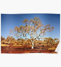 Hancock Gorge, Western Australia Poster