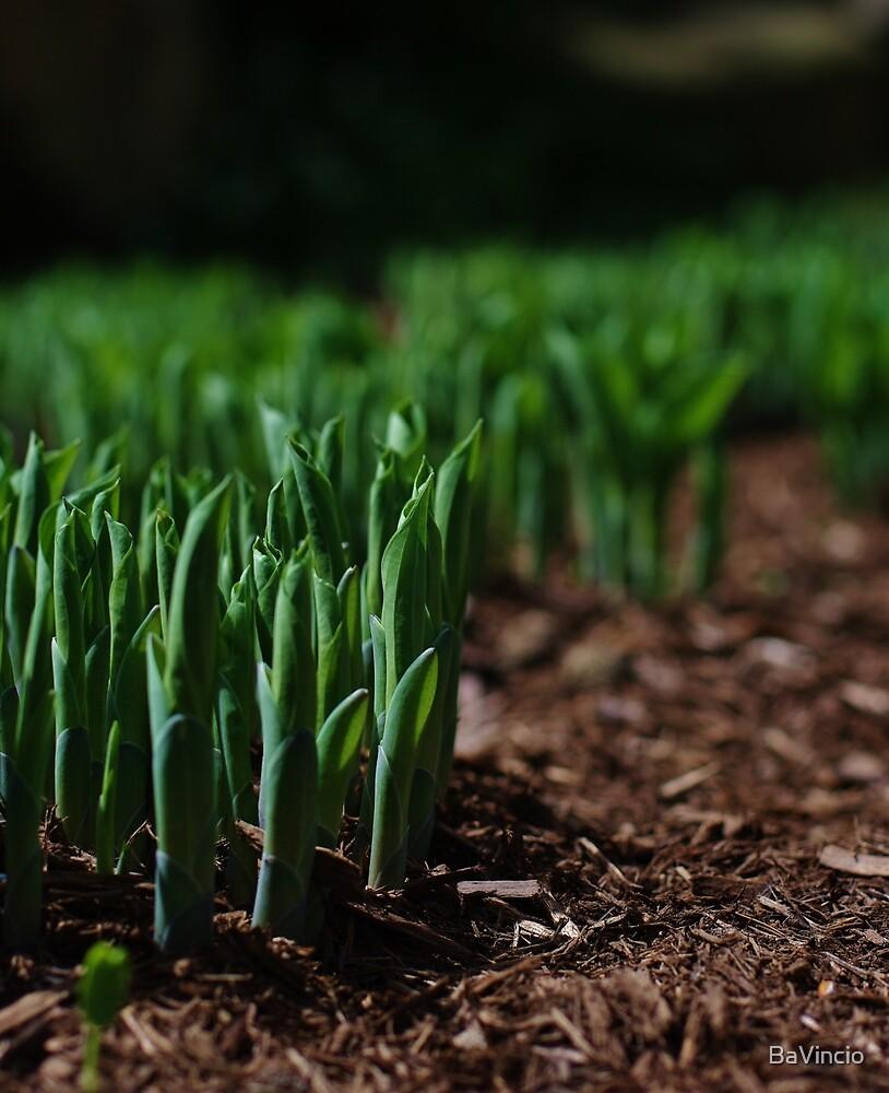 Spring Green by BaVincio