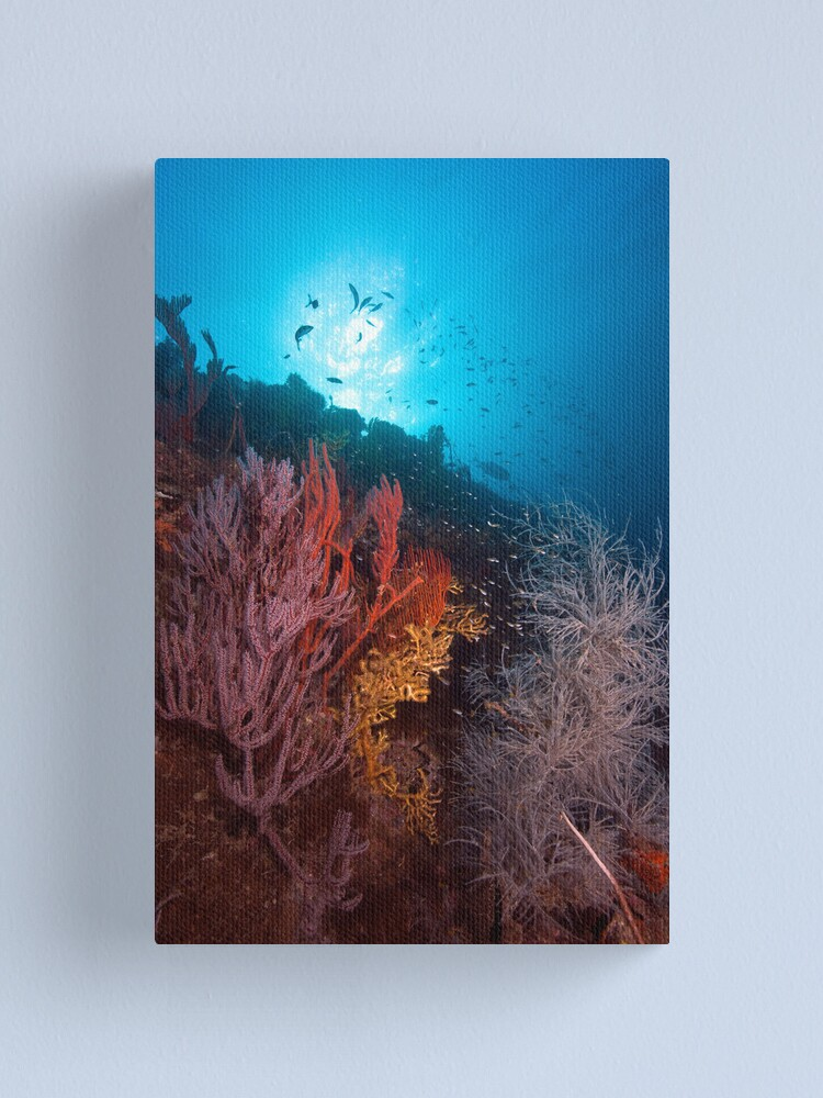 Alternate view of Coral on the wreck of the SS Yongala Canvas Print